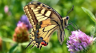Příroda a motýli v knihovně – výstava fotografií